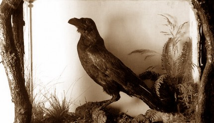 The real-life inspiration for Poe's The Raven