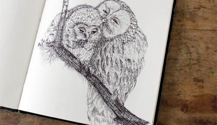 05 Owl-love