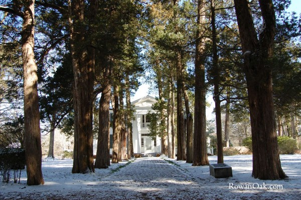 rowan-oak-snow-2-600x399