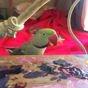 parrot by Nekka